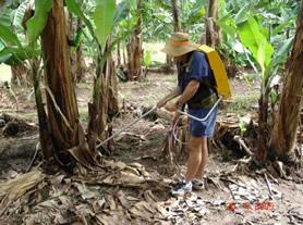 Banana Backpack Spear Injector