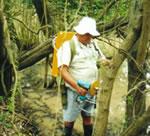Feral Tree Control